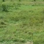 A residential land measuring 2500sqm