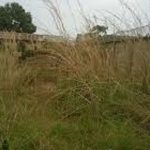 A parcel of residential land measuring 500sqm