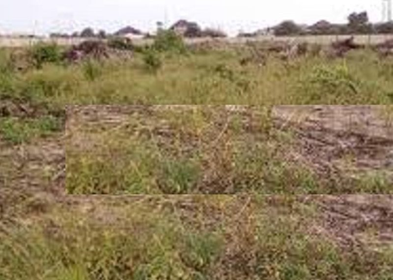 A residential land measuring 1000sqm