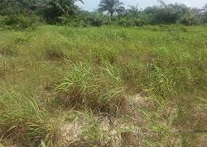 Plots of Land measuring 1000sqm for Sale in Lagos, Lekki, Ikate