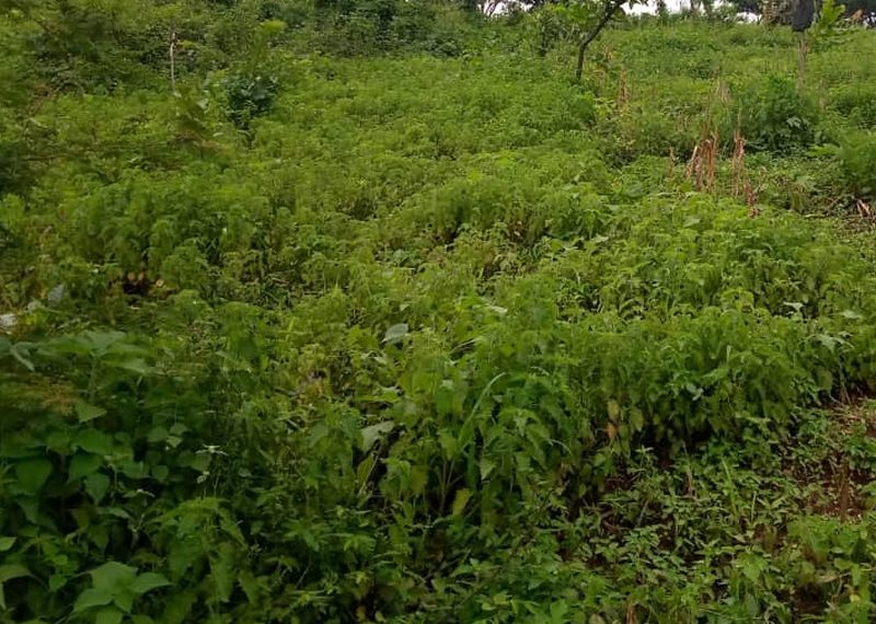 An acre of mixed use land for sale in Lagos, Ojo, Ijanikin