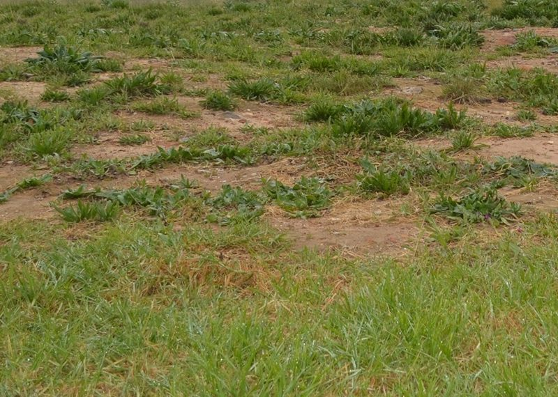 One and half plots of land measuring 960sqm for sale in Lagos, Anthony Village
