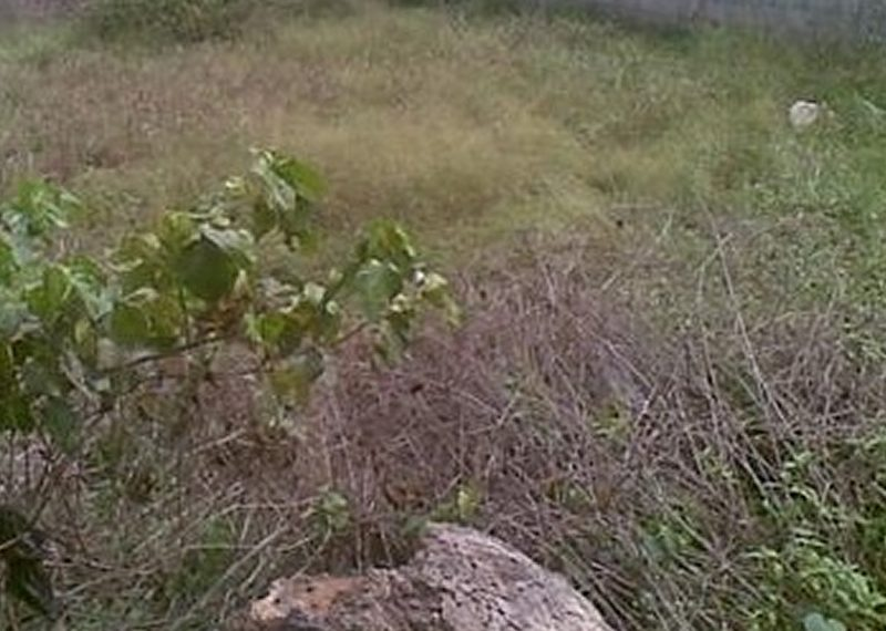 4 plots of fenced and gated land for sale in Lagos, Isolo, Ajao Estate