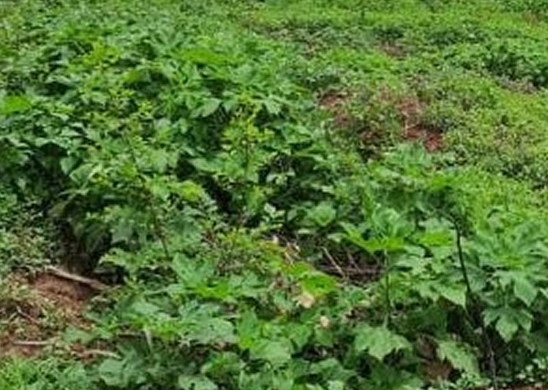 Well located 1,855sqm residential land for sale in Aso Villa, Asokoro, Abuja