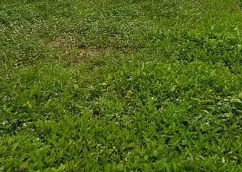 671.30sqm land for sale in Bariga